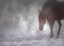 在雾的美丽的阿拉伯马 库存图片
