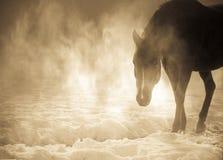 在雾的美丽的阿拉伯马 免版税库存图片