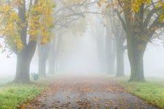 在雾的胡同与树在秋天 免版税库存照片