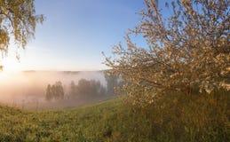 在雾的苹果计算机树 图库摄影