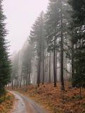 在雾的被烧的树 免版税库存图片