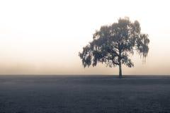 在雾的被隔绝的树 库存照片