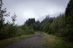 在雾的道路 免版税库存图片
