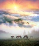 在雾的马在黎明 库存照片