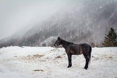 在雾的马在Cheget,厄尔布鲁士山 免版税图库摄影