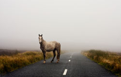 在雾的马 图库摄影