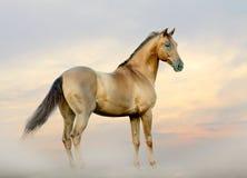 在雾的马 免版税库存图片