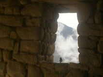 在雾的鸟 库存照片