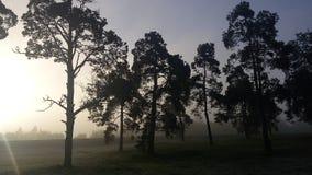 在雾的黎明 免版税库存照片