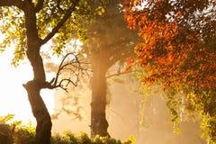 在雾的结构树 库存照片