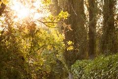 在雾的结构树 免版税库存照片