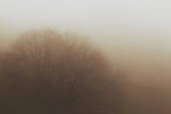 在雾以后的一棵树 库存照片