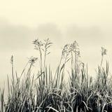 在雾-在黑白的简单派概念的藤茎剪影 免版税库存图片