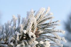 在霜下的树 库存图片