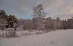 在霜冰的桃红色黎明天空和多雪的冬天森林和领域环境美化 免版税库存图片