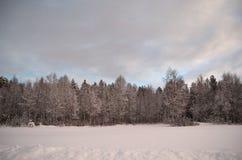 在霜冰的桃红色黎明天空和多雪的冬天森林和领域 免版税库存照片