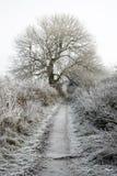 在霜包括的辔运输路线 库存照片