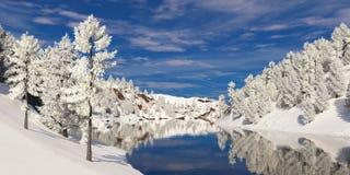 在霜和多云天空的树 免版税库存照片