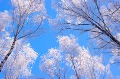 在霜和蓝天的冬天木头 免版税库存图片