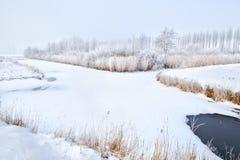 在霜的冻结河和结构树 库存照片