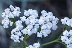在霜的前朵花在一冷淡的天 图库摄影