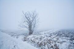 在霜的单独树在冬天有薄雾的草甸 库存照片