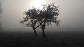 在霜的双树 免版税库存图片