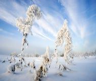 在霜的布什干伊冯茶在天空的背景 免版税库存图片