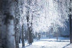 在霜的树枝 免版税库存照片