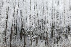在霜的树 免版税库存图片