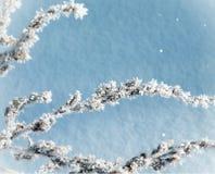 在霜的植物分支 库存照片