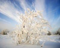 在霜的灌木在天空的背景 库存照片