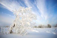 在霜的灌木在天空的背景 图库摄影