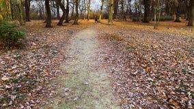 在霜的秋叶 影视素材