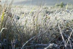 在霜的绿草 免版税库存图片