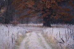 在霜的草和黄色大橡木 库存图片