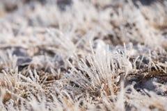 在霜的草,早晨霜 库存图片