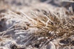 在霜的草,早晨霜 免版税库存照片