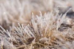 在霜的草,早晨霜 库存照片