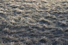 在霜的草 免版税库存照片
