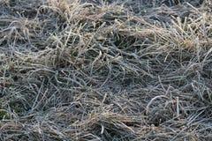 在霜的草 免版税图库摄影