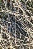 在霜的绿草 库存图片