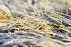 在霜的绿草 免版税库存照片
