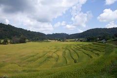 在露台的山的米领域。 免版税库存图片