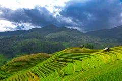 在露台的米领域Mu Cang柴,YenBai,农业越南, 免版税库存照片