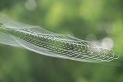 在露水的大白色蜘蛛网早晨在一个绿色夏天b 库存照片