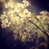 在露水下落的野花在一个晴朗的早晨 免版税库存照片