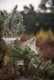 在露水报道的蜘蛛网在冷的秋天早晨 免版税图库摄影