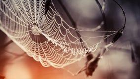 在露滴的蜘蛛网 免版税库存图片