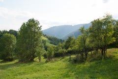 在青山中间的绿色树 免版税图库摄影